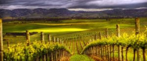 Barossa Valley Wine Tour @ Barossa valley Wine Tour | Adelaide | South Australia | Australia