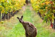 Cycling Tours Australia New Zealand#Australia#Barossa Valley#Wine Tours#Adelaide#