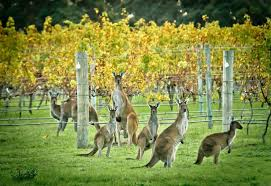 Margaret River Wine Tour @ Margaret River Wine Tour | Margaret River | Western Australia | Australia